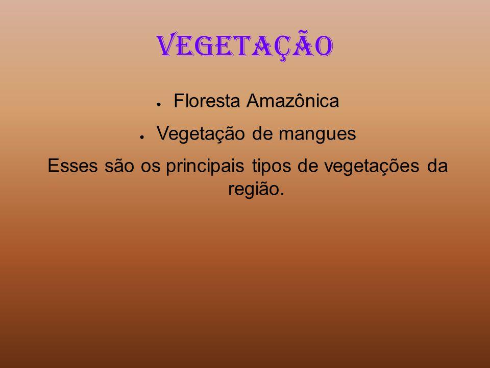 Vegetação Floresta Amazônica Vegetação de mangues Esses são os principais tipos de vegetações da região.