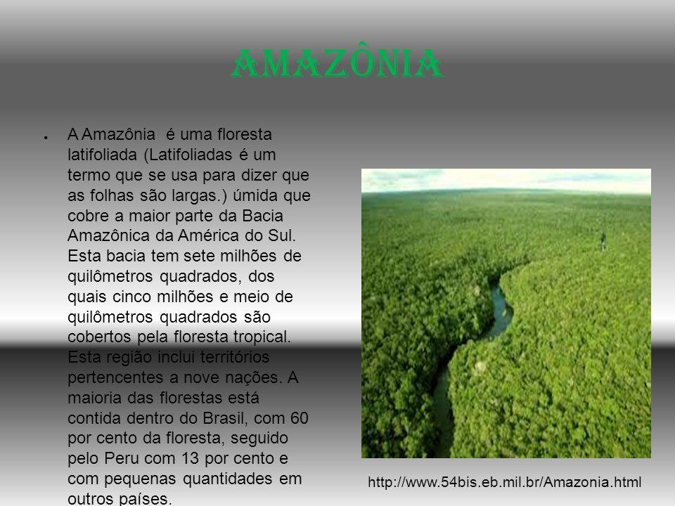 Amazônia A Amazônia é uma floresta latifoliada (Latifoliadas é um termo que se usa para dizer que as folhas são largas.) úmida que cobre a maior parte