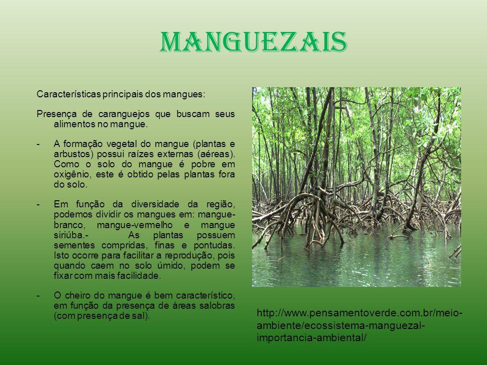 Manguezais Características principais dos mangues: Presença de caranguejos que buscam seus alimentos no mangue. -A formação vegetal do mangue (plantas