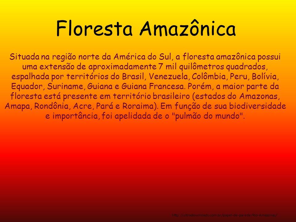 Situada na região norte da América do Sul, a floresta amazônica possui uma extensão de aproximadamente 7 mil quilômetros quadrados, espalhada por terr
