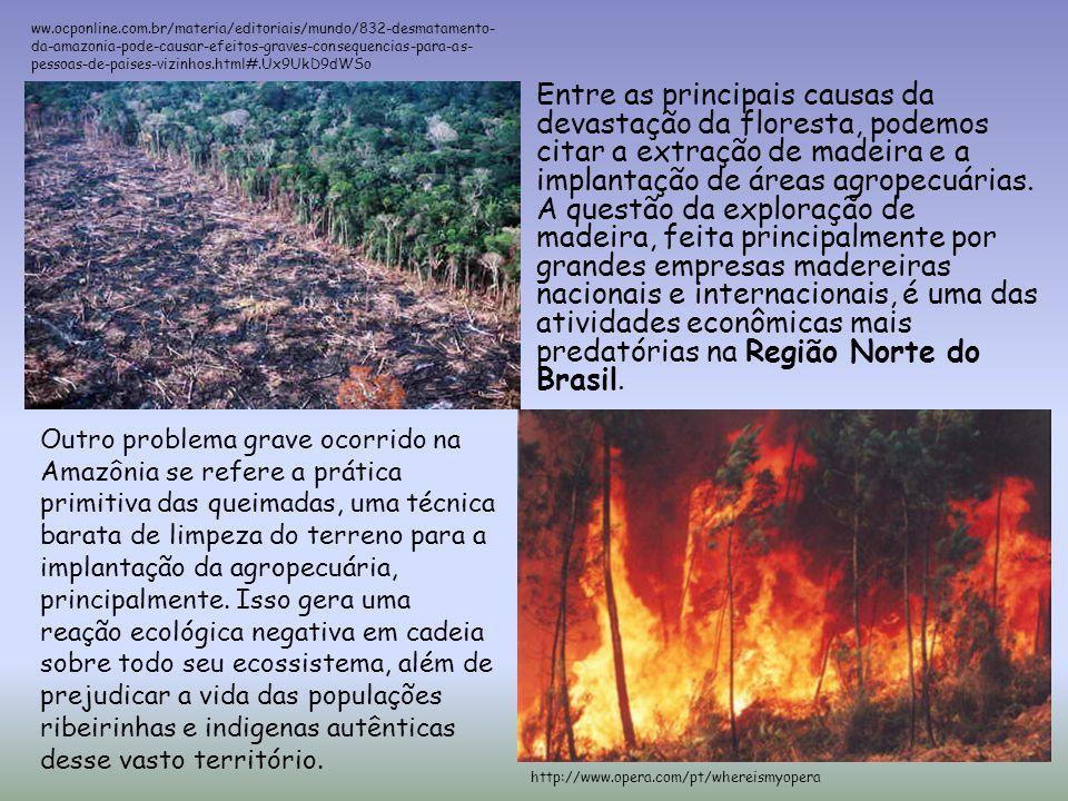 Entre as principais causas da devastação da floresta, podemos citar a extração de madeira e a implantação de áreas agropecuárias. A questão da explora