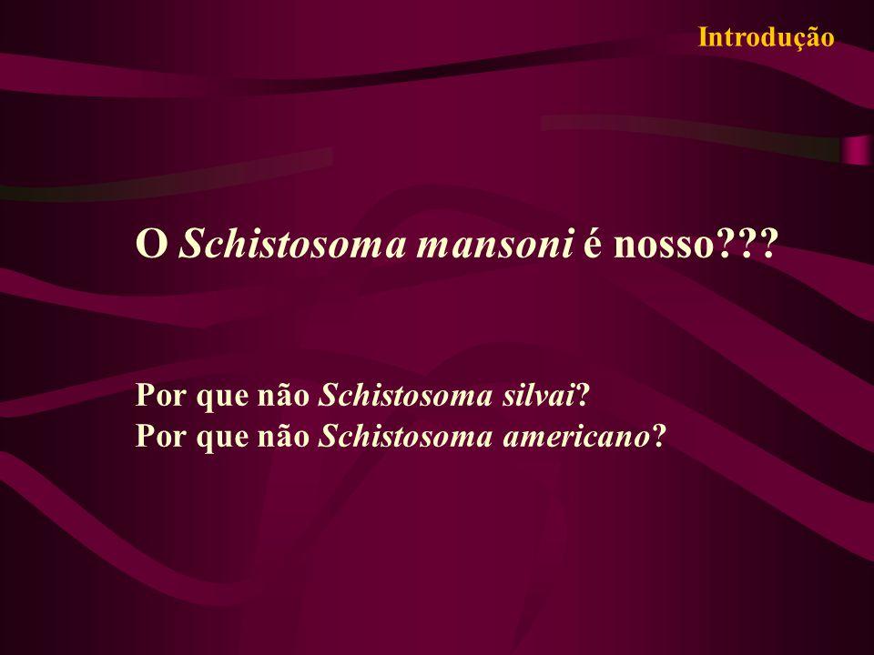 O Schistosoma mansoni é nosso??? Por que não Schistosoma silvai? Por que não Schistosoma americano? Introdução