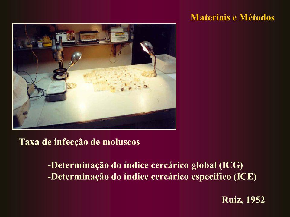Taxa de infecção de moluscos -Determinação do índice cercárico global (ICG) -Determinação do índice cercárico específico (ICE) Ruiz, 1952 Materiais e