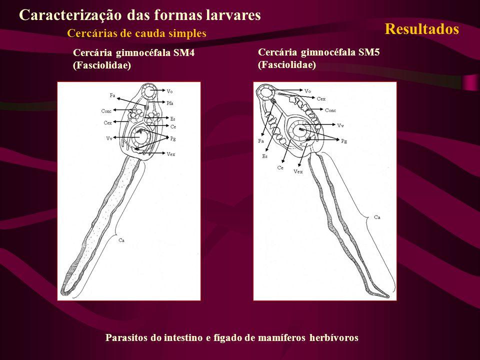 Cercária gimnocéfala SM4 (Fasciolidae) Cercária gimnocéfala SM5 (Fasciolidae) Parasitos do intestino e fígado de mamíferos herbívoros Caracterização d