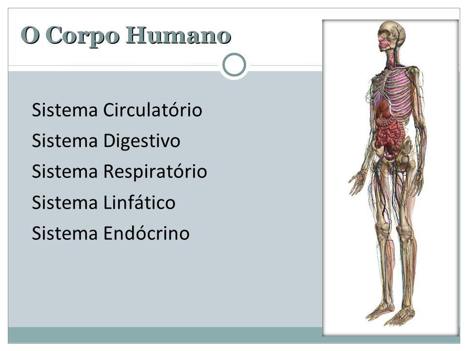 O Corpo Humano Sistema Circulatório Sistema Digestivo Sistema Respiratório Sistema Linfático Sistema Endócrino