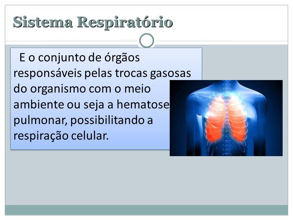 Sistema Respiratório E o conjunto de órgãos responsáveis pelas trocas gasosas do organismo com o meio ambiente ou seja a hematose pulmonar, possibilitando a respiração celular.