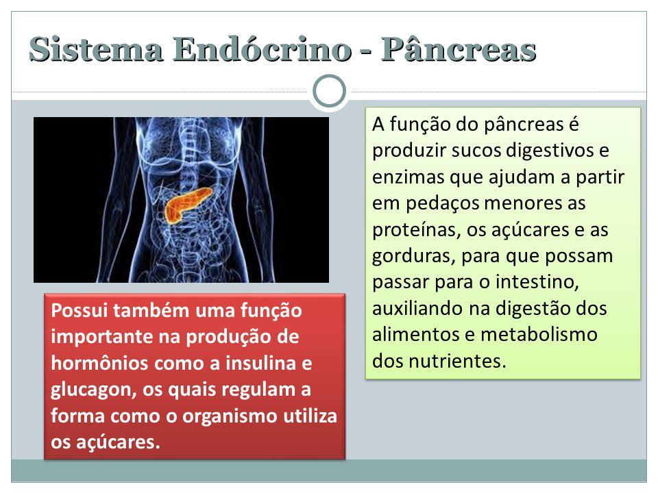 Sistema Endócrino - Pâncreas A função do pâncreas é produzir sucos digestivos e enzimas que ajudam a partir em pedaços menores as proteínas, os açúcares e as gorduras, para que possam passar para o intestino, auxiliando na digestão dos alimentos e metabolismo dos nutrientes.