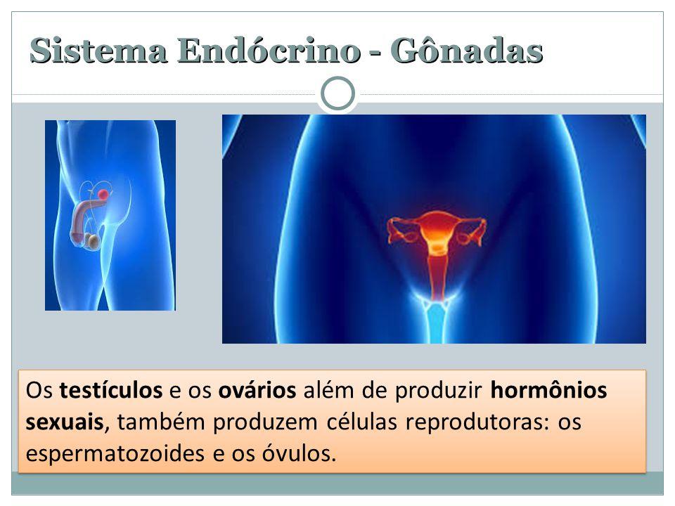 Sistema Endócrino - Gônadas Os testículos e os ovários além de produzir hormônios sexuais, também produzem células reprodutoras: os espermatozoides e os óvulos.