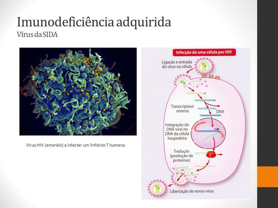 Imunodeficiência adquirida Vírus da SIDA Vírus HIV (amarelo) a infectar um linfócito T humano.
