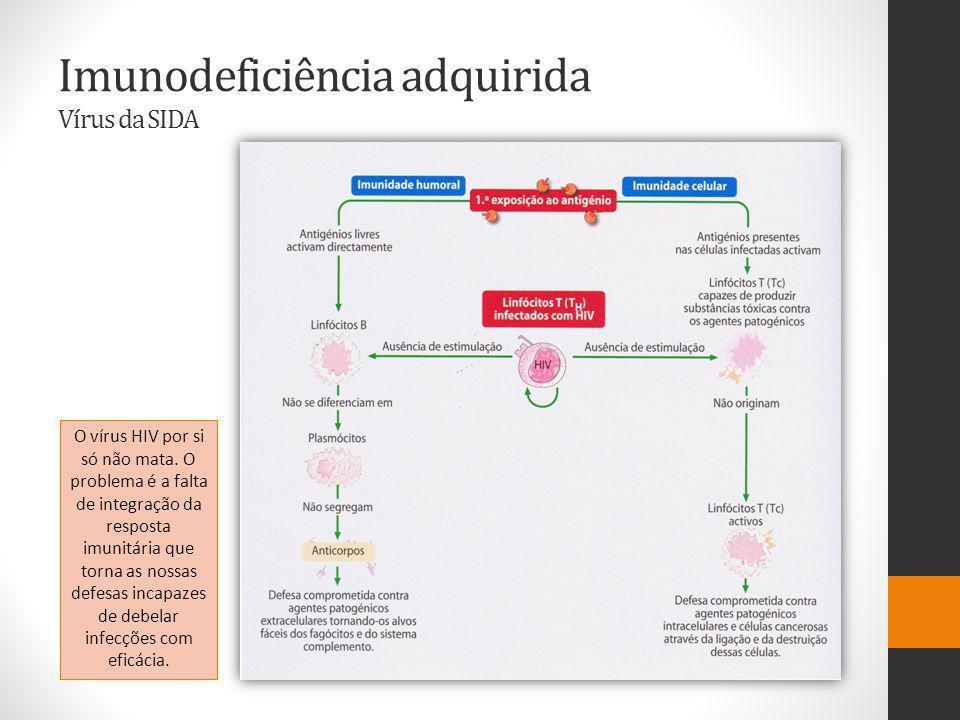 Imunodeficiência adquirida Vírus da SIDA O vírus HIV por si só não mata.