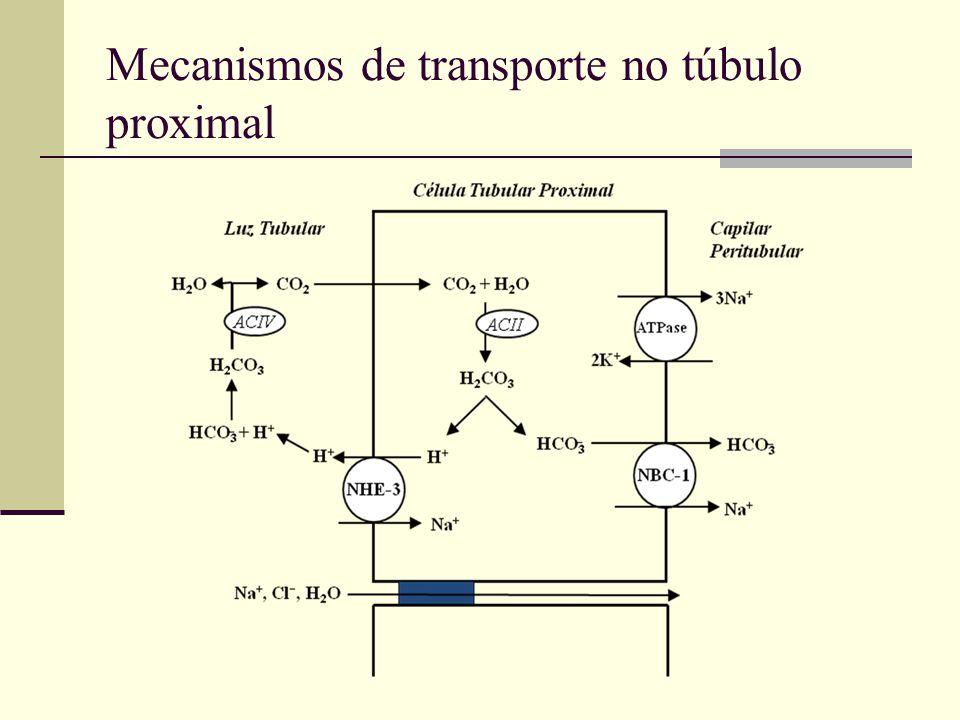 Mecanismos de transporte no túbulo proximal