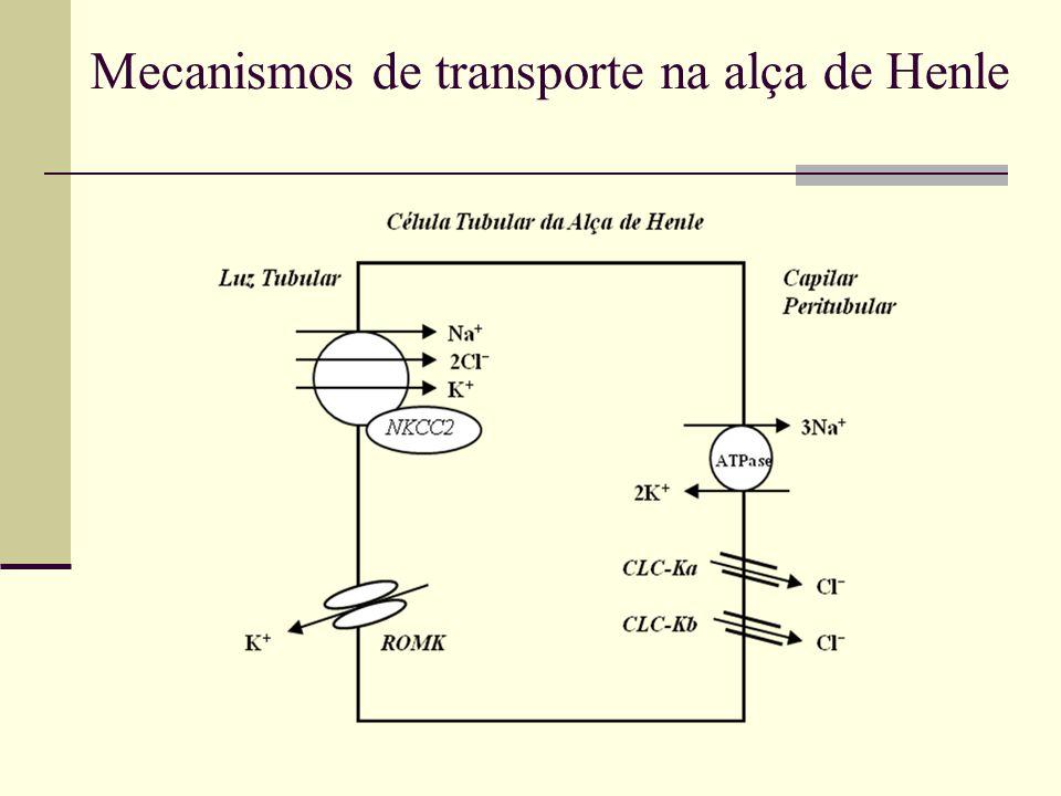 Mecanismos de transporte na alça de Henle