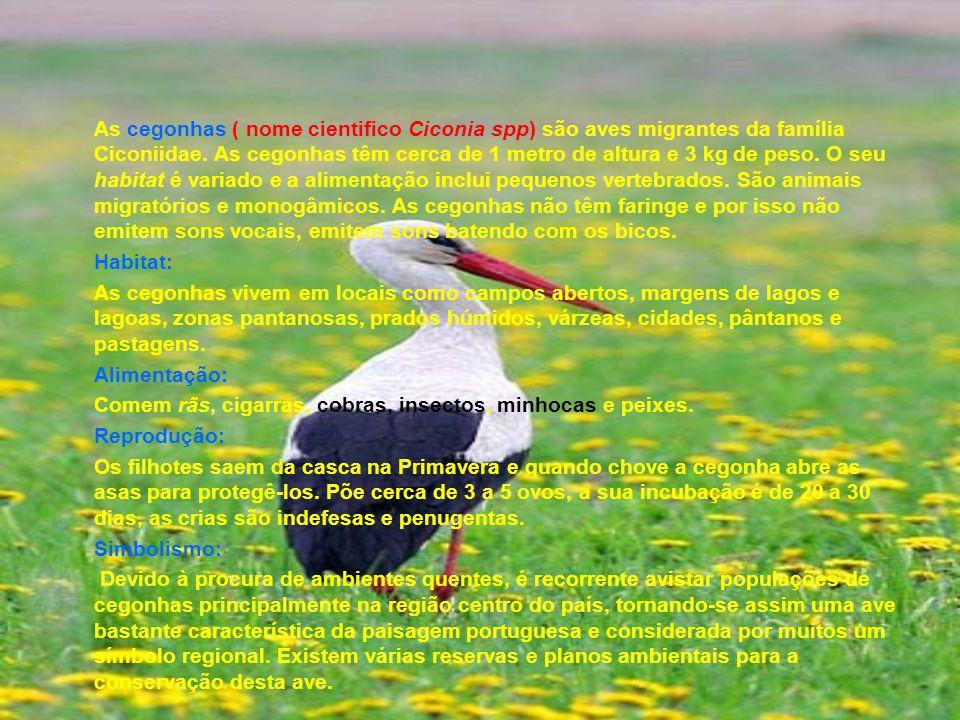 As cegonhas ( nome cientifico Ciconia spp) são aves migrantes da família Ciconiidae. As cegonhas têm cerca de 1 metro de altura e 3 kg de peso. O seu