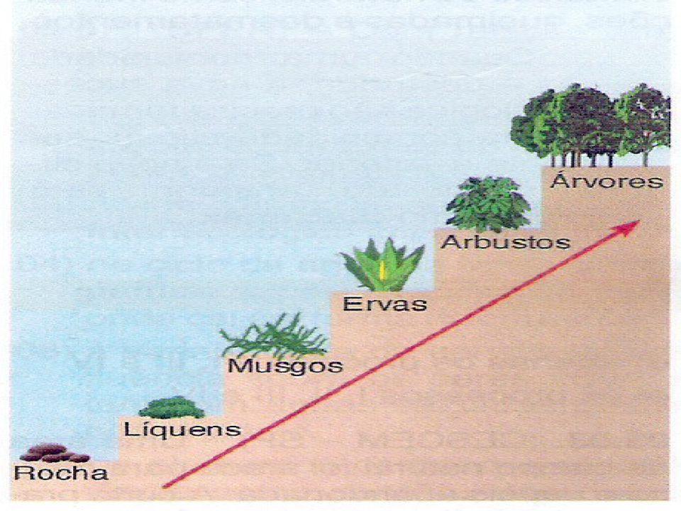 Comunidade Pioneira (Ecese): são os primeiros organismos a se instalarem no ambiente: líquens, musgos, gramíneas e insetos.