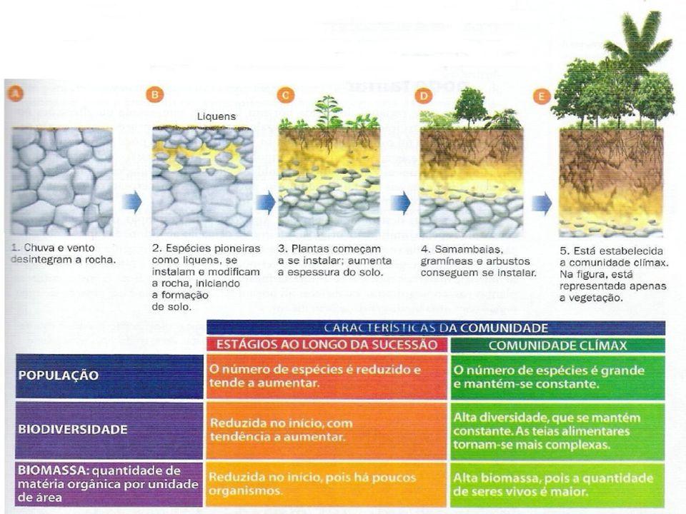 Ocorre ao longo de uma sucessão ecológica: Aumento da produtividade bruta Aumento do consumo Diminuição da produtividade líquida Aumento da biomassa Aumento da diversidade de espécies extinção de algumas espécies e surgimento de outras PRODUTIVIDADE Produtividade Bruta (PB): total de matéria orgânica, produzida pela comunidade, através da fotossíntese Produtividade Líquida (PL): representa o saldo obtido, da relação entre a produção (fotossíntese) e o consumo (respiração) de uma comunidade.
