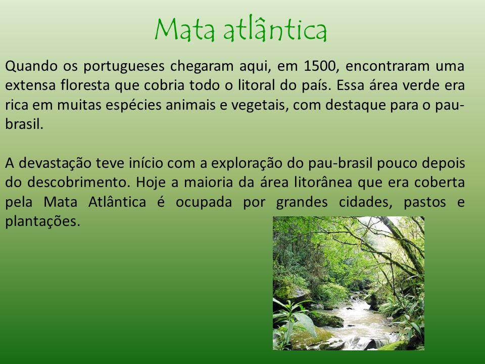 Quando os portugueses chegaram aqui, em 1500, encontraram uma extensa floresta que cobria todo o litoral do país.