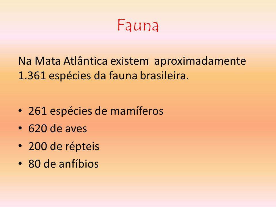 Fauna Na Mata Atlântica existem aproximadamente 1.361 espécies da fauna brasileira.