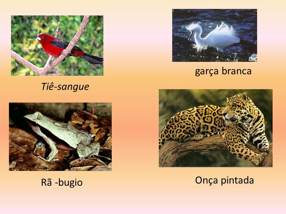 Fauna Na Mata Atlântica existem aproximadamente 1.361 espécies da fauna brasileira. 261 espécies de mamíferos 620 de aves 200 de répteis 80 de anfíbio