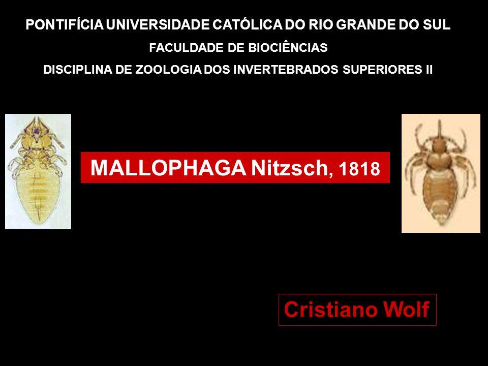 PONTIFÍCIA UNIVERSIDADE CATÓLICA DO RIO GRANDE DO SUL FACULDADE DE BIOCIÊNCIAS DISCIPLINA DE ZOOLOGIA DOS INVERTEBRADOS SUPERIORES II MALLOPHAGA Nitzs
