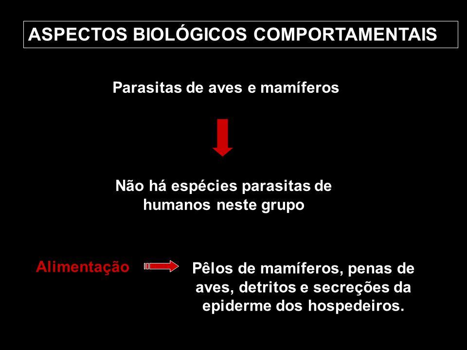 ASPECTOS BIOLÓGICOS COMPORTAMENTAIS Parasitas de aves e mamíferos Não há espécies parasitas de humanos neste grupo Alimentação Pêlos de mamíferos, pen
