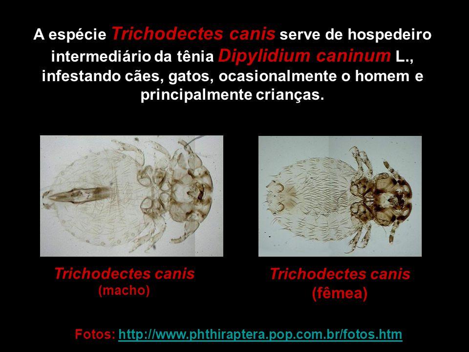 A espécie Trichodectes canis serve de hospedeiro intermediário da tênia Dipylidium caninum L., infestando cães, gatos, ocasionalmente o homem e princi