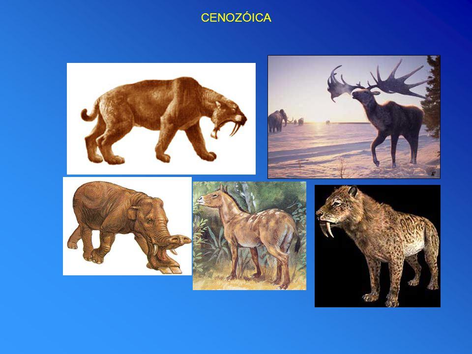 CENOZÓICA