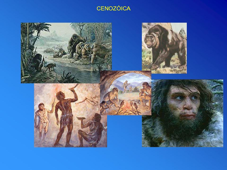 Evolução da Era Cenozóica ERA CENOZÓICA Sub-Era Período Intervalo de Tempo (M.a.) Plantas e Animais Terciária Paleoceno Eoceno 24 a 2,5 66 a 24 Animais invertebrados representados por quase todas as famílias actualmente existentes.