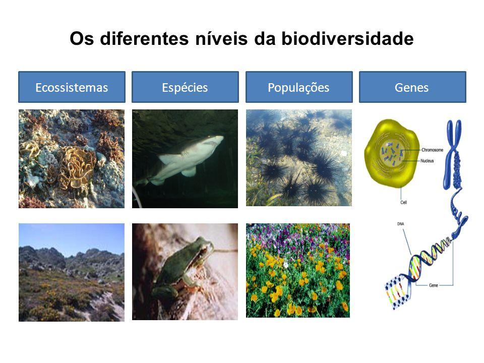 Os diferentes níveis da biodiversidade EcossistemasEspéciesPopulaçõesGenes