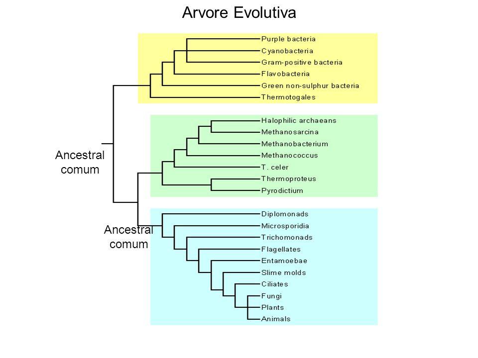Ancestral comum Arvore Evolutiva