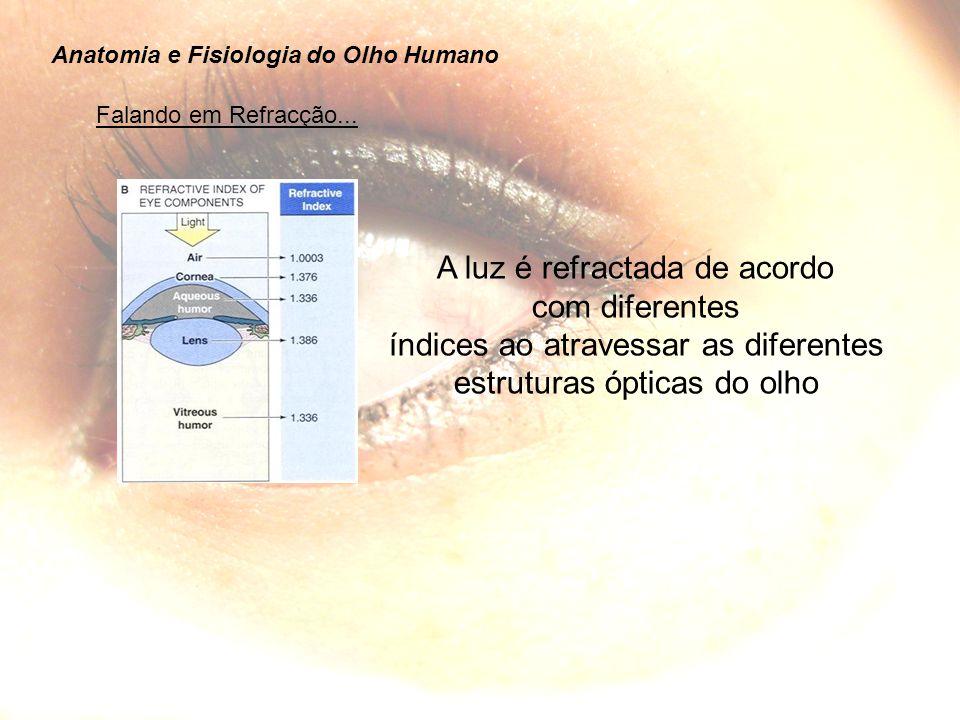 Anatomia e Fisiologia do Olho Humano Falando em Refracção...