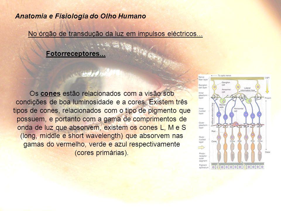 Anatomia e Fisiologia do Olho Humano No órgão de transdução da luz em impulsos eléctricos...