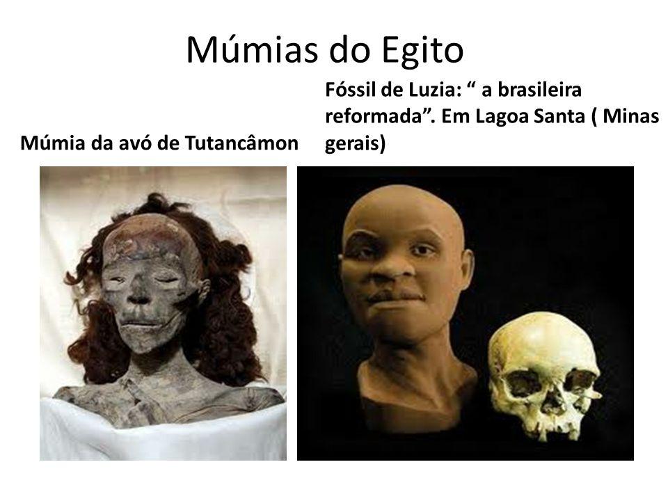 Múmias do Egito Múmia da avó de Tutancâmon Fóssil de Luzia: a brasileira reformada. Em Lagoa Santa ( Minas gerais)