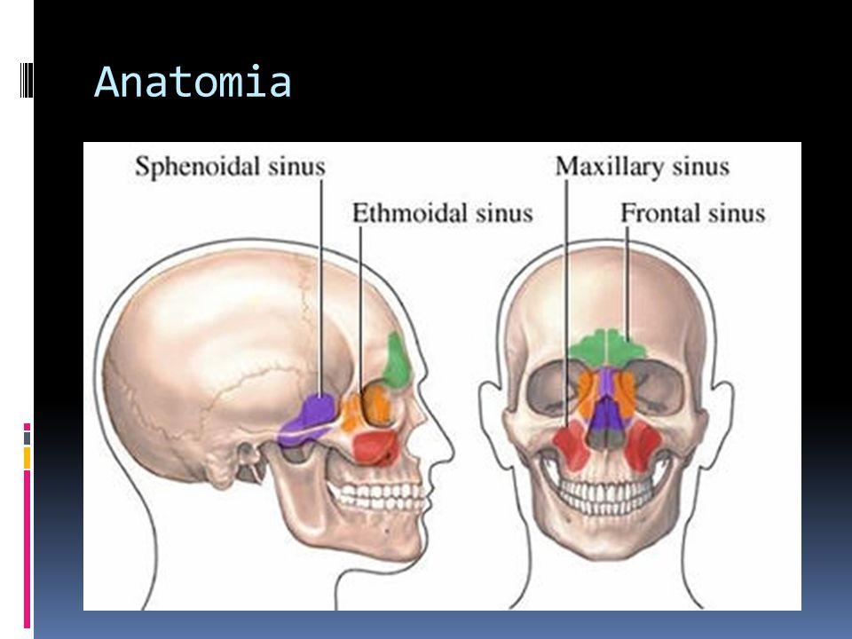 Sinais e Sintomas - Faciais Dor (região geniana, por acometimento do nervo infraorbitário) Abaulamento da região geniana e assimetria facial – destruição da parede anterior dos seios maxilar Dor facial, anestesia ou parestesia – acometimento dos ramos do nervo trigêmio