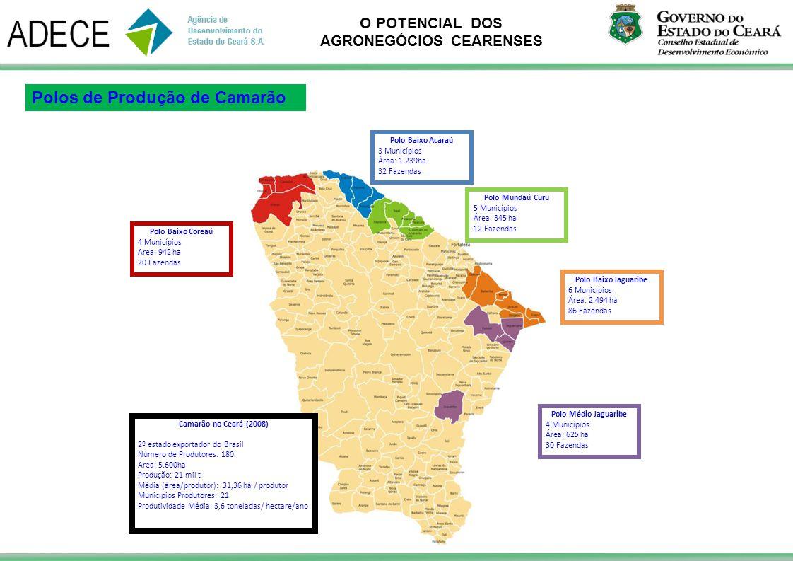 O POTENCIAL DOS AGRONEGÓCIOS CEARENSES Polo Médio Jaguaribe 4 Municípios Área: 625 ha 30 Fazendas Polo Baixo Jaguaribe 6 Municípios Área: 2.494 ha 86