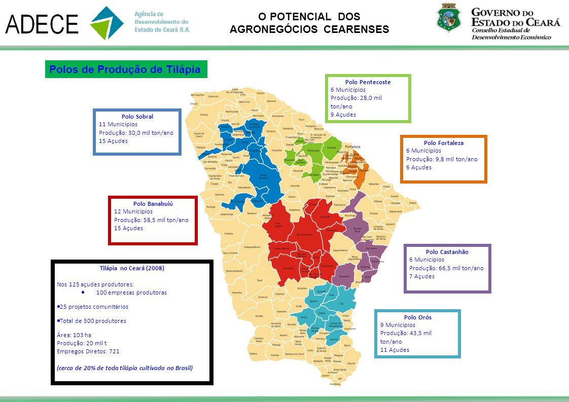 O POTENCIAL DOS AGRONEGÓCIOS CEARENSES Polo Orós 9 Municípios Produção: 43,5 mil ton/ano 11 Açudes Tilápia no Ceará (2008) Nos 125 açudes produtores: