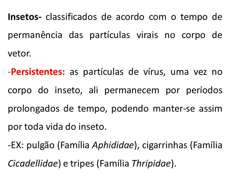 Insetos- classificados de acordo com o tempo de permanência das partículas virais no corpo de vetor. -Persistentes: as partículas de vírus, uma vez no