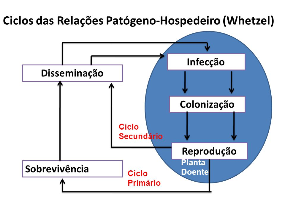 Ciclos das Relações Patógeno-Hospedeiro (Whetzel) Disseminação Infecção Colonização Reprodução Sobrevivência Ciclo Secundário Ciclo Primário Planta Do