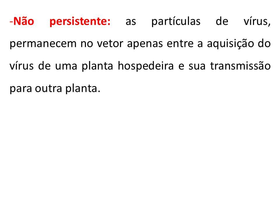 -Não persistente: as partículas de vírus, permanecem no vetor apenas entre a aquisição do vírus de uma planta hospedeira e sua transmissão para outra