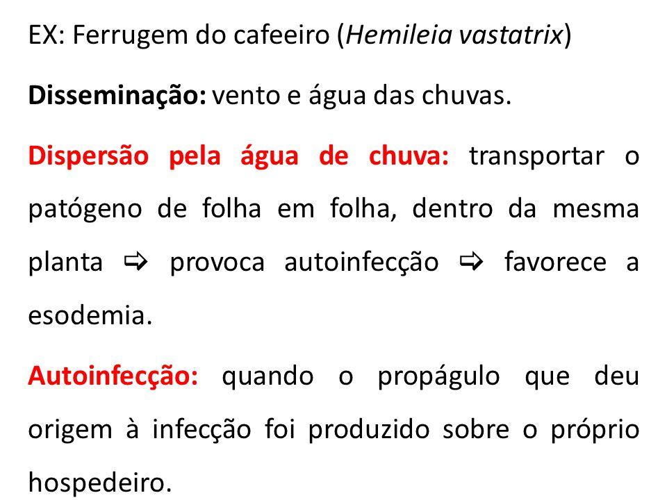 EX: Ferrugem do cafeeiro (Hemileia vastatrix) Disseminação: vento e água das chuvas. Dispersão pela água de chuva: transportar o patógeno de folha em