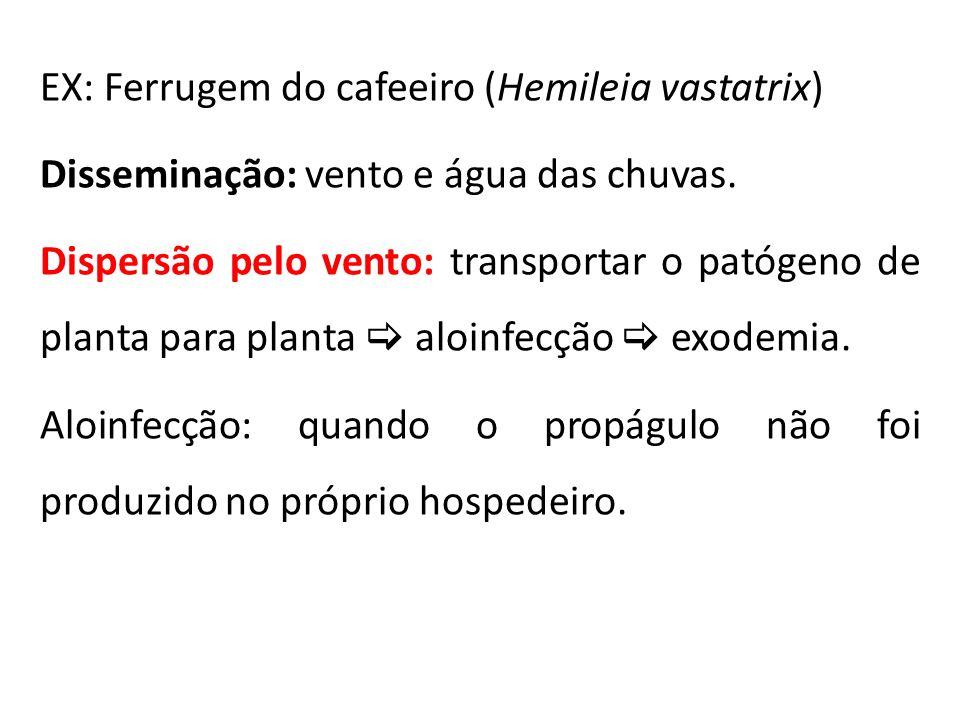 EX: Ferrugem do cafeeiro (Hemileia vastatrix) Disseminação: vento e água das chuvas. Dispersão pelo vento: transportar o patógeno de planta para plant