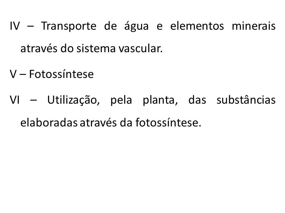 IV – Transporte de água e elementos minerais através do sistema vascular. V – Fotossíntese VI – Utilização, pela planta, das substâncias elaboradas at