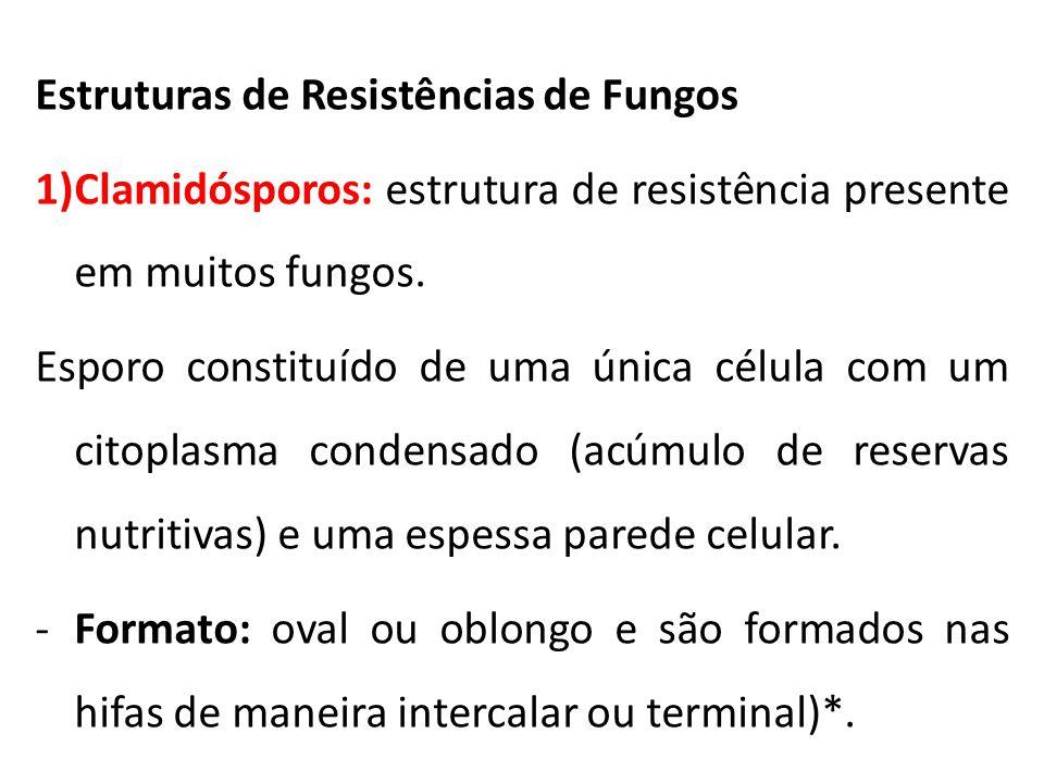 Estruturas de Resistências de Fungos 1)Clamidósporos: estrutura de resistência presente em muitos fungos. Esporo constituído de uma única célula com u