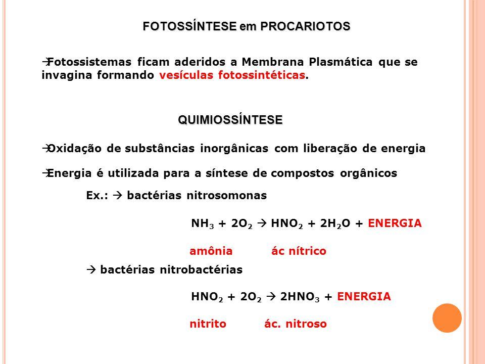 FOTOSSÍNTESE em PROCARIOTOS Fotossistemas ficam aderidos a Membrana Plasmática que se invagina formando vesículas fotossintéticas.