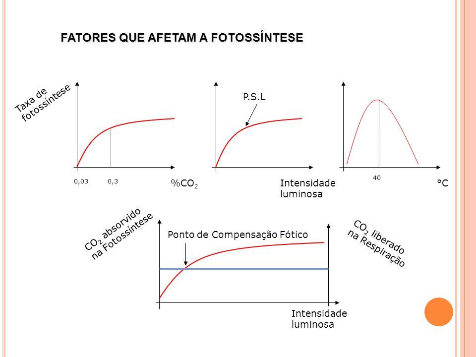 Taxa de fotossíntese %CO 2 Intensidade luminosa °C 0,03 0,3 P.S.L 40 CO 2 absorvido na Fotossíntese Intensidade luminosa CO 2 liberado na Respiração Ponto de Compensação Fótico FATORES QUE AFETAM A FOTOSSÍNTESE