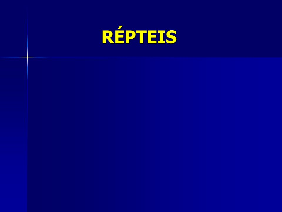 CROTALÍNEOS FOSSETAS LOREIAS PRESENTES ATRAÍDOS PELO CALOR CABEÇA TRIANGULAR Bothrops (Jararacas), Crotalus (Cascavéis) e Lachesis (Surucucus) ELAPÍDEOS FOSSETAS LOREIAS AUSENTES CABEÇA ARREDONDADA Micrurus (Corais)