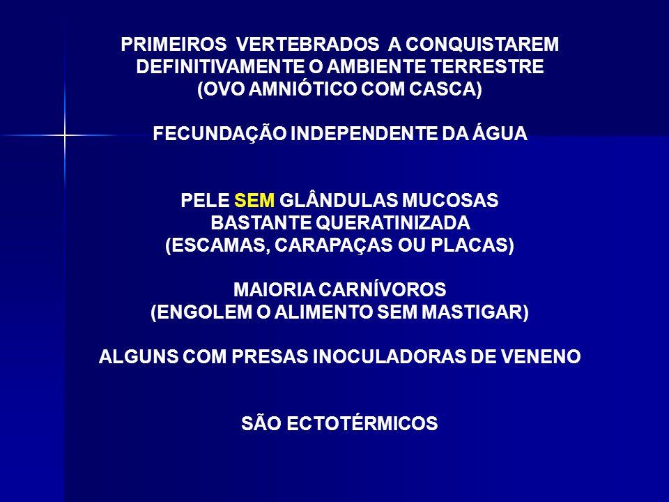 VENENOSASNÃO VENENOSAS CAUDA CURTA, AFINADA BRUSCAMENTE. CAUDA LONGA, AFINADA GRADUALMENTE.