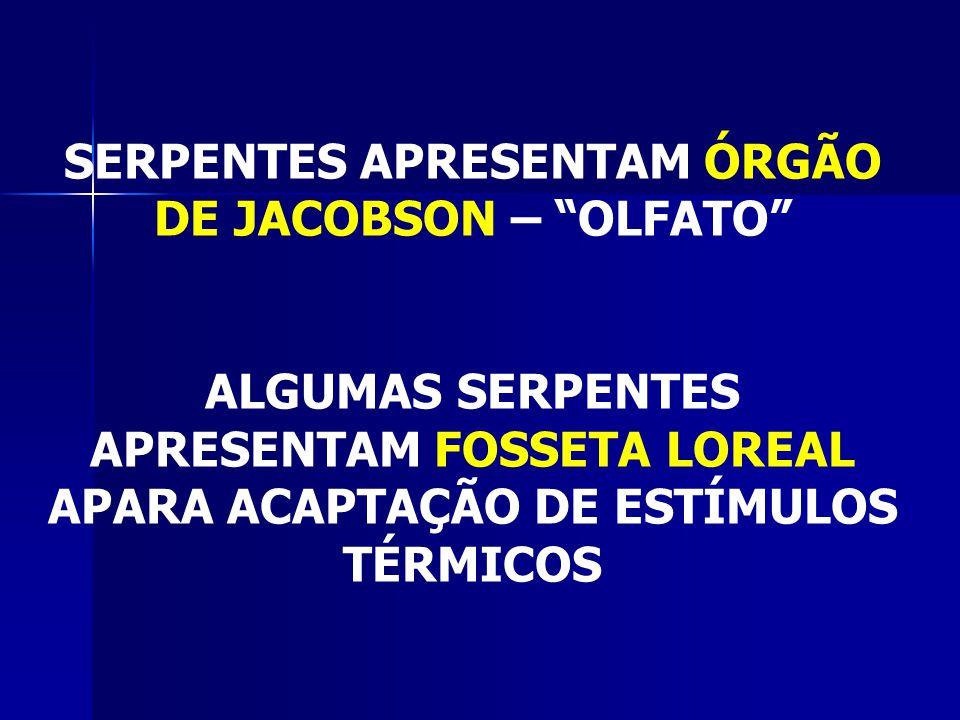 HÁ MUITO MAIS SERPENTES NÃO-PEÇONHENTAS DO QUE PEÇONHENTAS (NO BRASIL MENOS DE 30%)