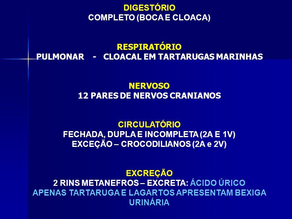 DIGESTÓRIO COMPLETO (BOCA E CLOACA) RESPIRATÓRIO PULMONAR - CLOACAL EM TARTARUGAS MARINHAS NERVOSO 12 PARES DE NERVOS CRANIANOS CIRCULATÓRIO FECHADA, DUPLA E INCOMPLETA (2A E 1V) EXCEÇÃO – CROCODILIANOS (2A e 2V) EXCREÇÃO 2 RINS METANEFROS – EXCRETA: ÁCIDO ÚRICO APENAS TARTARUGA E LAGARTOS APRESENTAM BEXIGA URINÁRIA