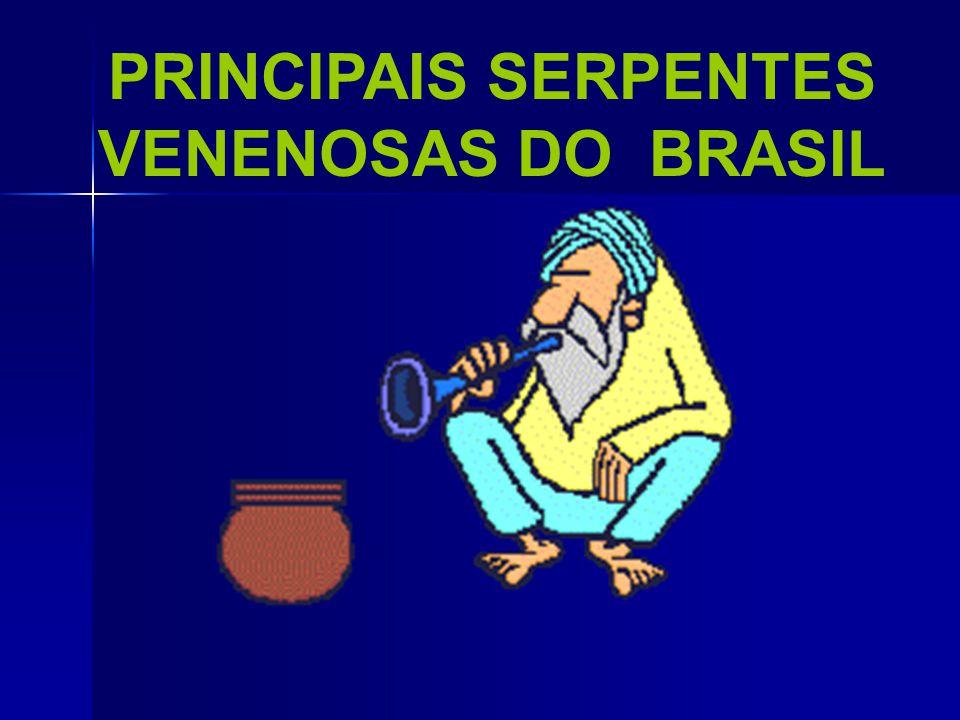 VENENOSASNÃO VENENOSAS QUANDO PERSEGUIDA, TOMA ATITUDE DE ATAQUE, ENRODILHANDO-SE. QUANDO PERSEGUIDA, FOGE.