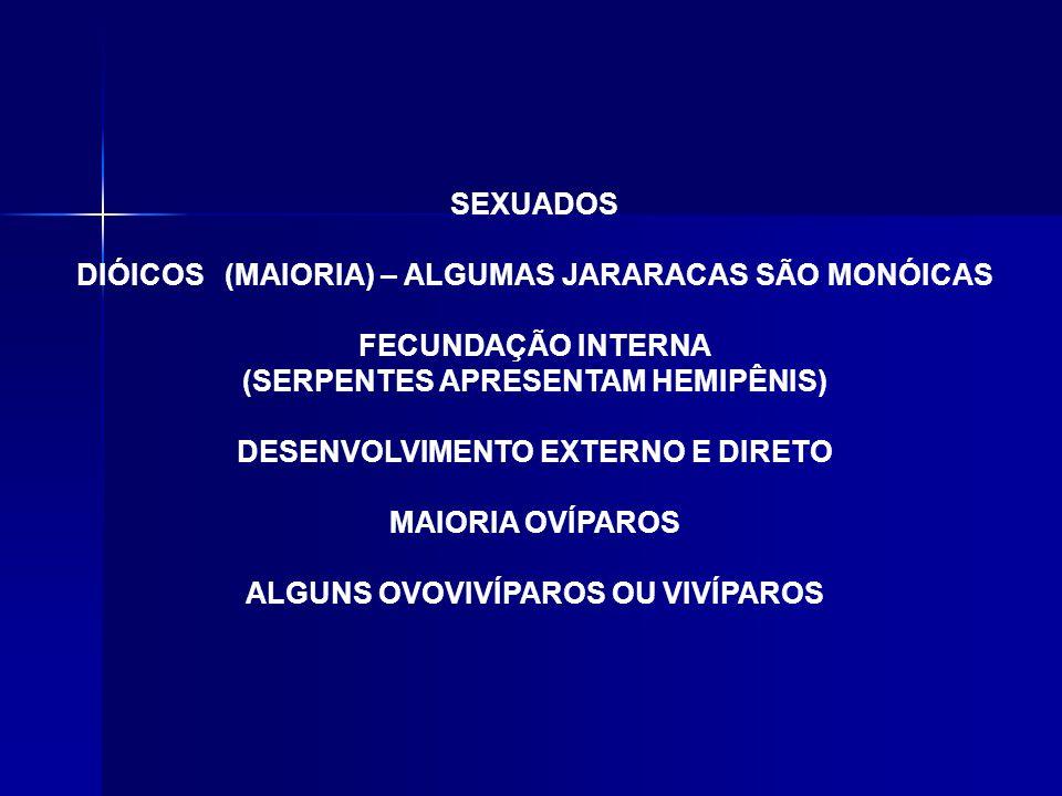 SEXUADOS DIÓICOS (MAIORIA) – ALGUMAS JARARACAS SÃO MONÓICAS FECUNDAÇÃO INTERNA (SERPENTES APRESENTAM HEMIPÊNIS) DESENVOLVIMENTO EXTERNO E DIRETO MAIORIA OVÍPAROS ALGUNS OVOVIVÍPAROS OU VIVÍPAROS